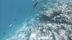 Underwater reefs and marine life. Indian Ocean video. Action camera stock video footage