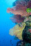 Underwater Reefscape. An underwater reefscape with sea fans, fish and blue water Stock Photos