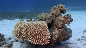 Underwater relax video about coral reef of Red sea. Bright marine nature stock video footage