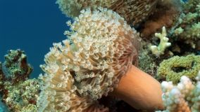 Underwater relax video about coral reef of Red sea. Bright marine nature stock footage