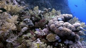 Underwater relax video about coral reef of Red sea. Bright marine nature on background of beautiful lagoon stock video footage
