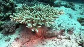 Underwater relax video about marine nature in pure transparent of Red sea. Bright background of beautiful lagoon stock footage