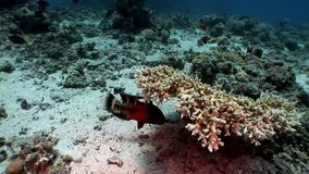 Underwater relax video about marine nature in pure transparent of Red sea. Bright background of beautiful lagoon stock video footage