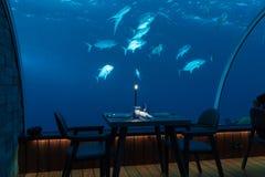 Underwater restaurant with fish stock photo
