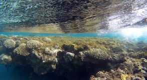 Colorfull Coral reef  in Red Sea. Underwater colorfull  coral reef with mirrow reflex effect on top of water with wihte air bubble wave in the Red Sea Stock Photography