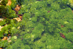Underwater river's plants Royalty Free Stock Photos