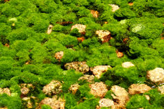 Underwater river's plants Stock Photography