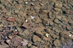 Underwater riverbed rocks in a river royalty free stock photo