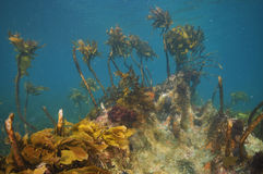 Free Underwater Rock With Some Kelp Stock Photo - 69689880
