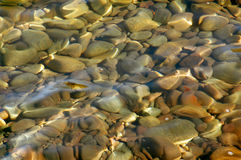 Underwater Rocks. Underwater pebbles in golden light royalty free stock photo