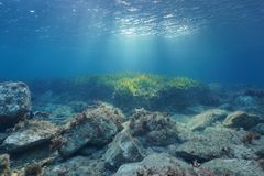 Underwater rocks and seagrass natural sunlight. Underwater rocks and seagrass on the seabed with natural sunlight through water surface, Mediterranean sea, Costa Royalty Free Stock Images