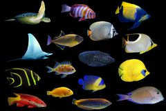 Lot of saltwater group of aquatic animals in black background stock photography