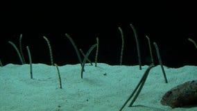 Underwater sand worm in aquarium. Water stock footage