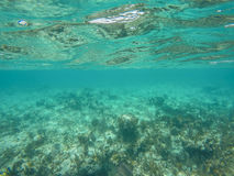 Underwater in Sandy Toes, Bahamas. Sandy Toes Island in Nassau, Bahamas Beaches Stock Photos