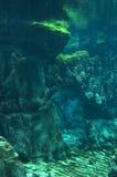 Underwater scape Stock Photo