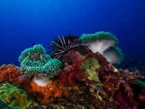 Underwater Scape of Coral Reef Stock Photos