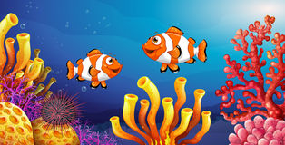 Underwater scene with clownfish and sea urchin. Illustration Stock Images