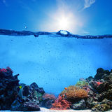 Underwater scene. Coral reef, blue sky