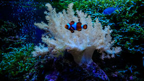Underwater scene Royalty Free Stock Photos