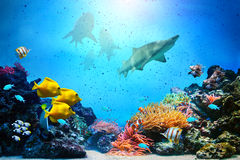 Underwater scene. Coral reef, fish groups. Underwater scene. Coral reef, colorful fish groups, sharks and sunny sky shining through clean ocean water. High res Stock Photography