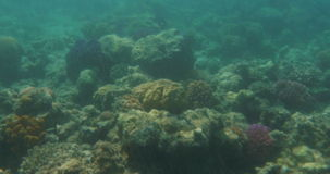 Underwater scene with coral reef and fish stock video footage