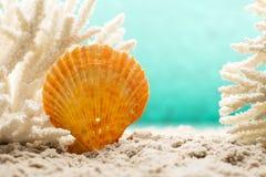 Underwater scene. Stock Image