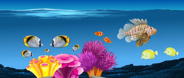 Underwater scene with fish and coral reef. Illustration Royalty Free Stock Image