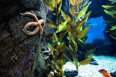 Underwater scene Royalty Free Stock Images