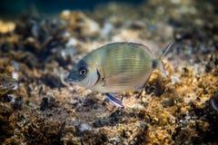 Underwater Scene with Fish Stock Photo