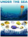 Underwater scene with fish and seaweed Royalty Free Stock Photography
