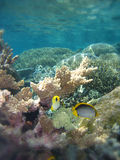 Underwater Scene of Great Barrier Reef Stock Images