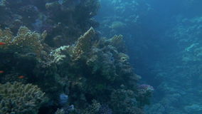 Underwater scene of huge coral reef and fish stock video