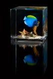 Underwater scene inside plastic cube Stock Photos