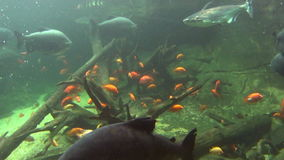 Underwater Scene 1 stock footage