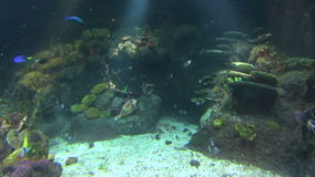 Underwater Scene 2 stock video footage