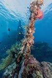 Coral reef off coast of Bali Stock Photos