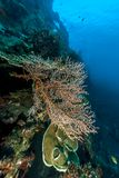 Coral reef off coast of Bali Stock Image