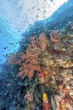 Coral reef off coast of Bali. Underwater scene off the coast of Bali  Tulamben Stock Photo