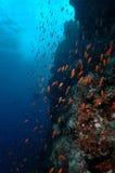 Underwater scene schooling fish aceh indonesia scuba Stock Photo