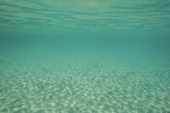 Underwater scene in shallow lagoon Royalty Free Stock Image