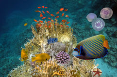 Underwater scene, showing different colorful fishes swimming Stock Photos