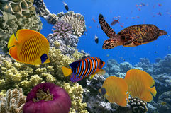 Underwater scene, showing different colorful fishes swimming Royalty Free Stock Images