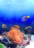 Underwater scene with tropical fish Stock Photos
