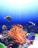 Underwater scene with tropical fish Stock Images