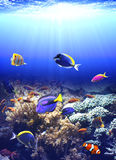 Underwater scene with tropical fish Stock Photo
