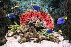 Underwater scene with tropical fish Stock Photos