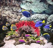 Underwater scene with tropical fish Royalty Free Stock Photography