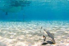Underwater scene in tropical sandy beach, Koufonisi island, Crete. Royalty Free Stock Photo