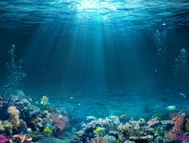 Underwater Scene - Tropical Seabed With Reef