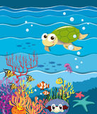 Underwater scene with turtle and fish Stock Images